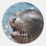 Pegatinas lindos del león marino pegatina redonda