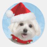 Pegatinas malteses del navidad del perrito etiqueta redonda