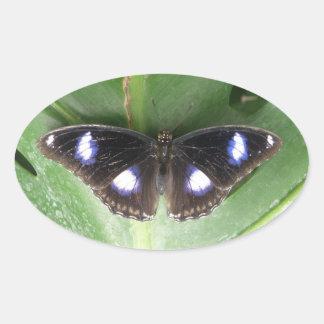 Pegatinas manchados azul hermoso de la mariposa pegatina ovalada