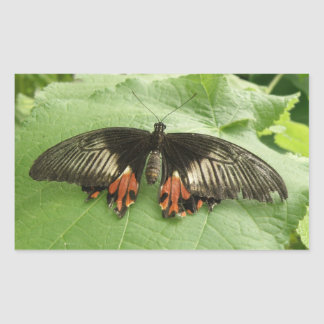 Pegatinas negros bonitos de la mariposa del rojo y pegatina rectangular