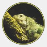 Pegatinas nobles de la iguana pegatinas redondas