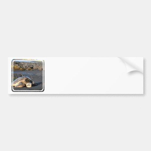 Pegatinas para el parachoques de la tortuga de mar pegatina para auto