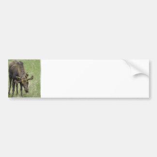 Pegatinas para el parachoques de los alces de Bull Etiqueta De Parachoque
