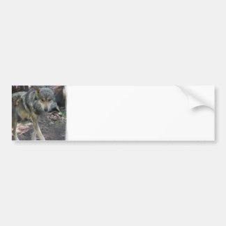 Pegatinas para el parachoques de vagabundeo del lo pegatina para auto