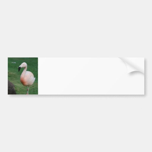 Pegatinas para el parachoques del paseo del flamen etiqueta de parachoque