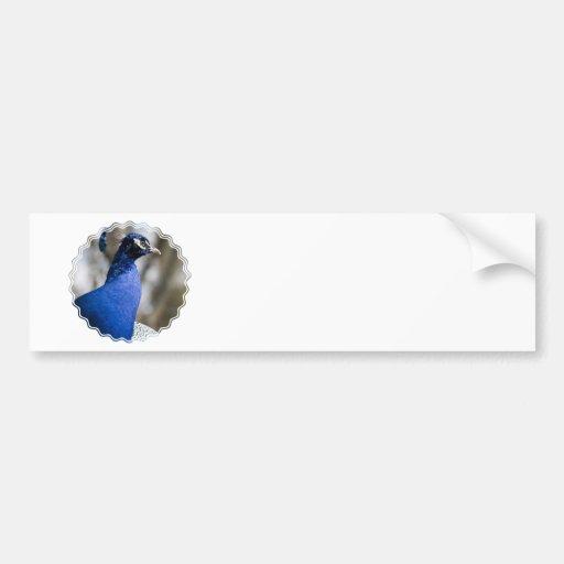 Pegatinas para el parachoques del Peafowl Etiqueta De Parachoque