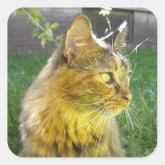 Pegatinas preciosos pensativos del gatito pegatina cuadrada