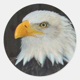 Pegatinas principales de Eagle Pegatina Redonda