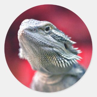 Pegatinas principales del dragón pegatinas redondas