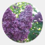Pegatinas púrpuras de las lilas pegatina redonda