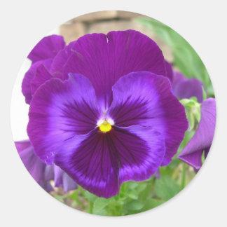 Pegatinas púrpuras del pensamiento