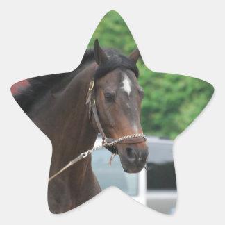 Pegatinas que se lanzan del caballo de bahía colcomanias forma de estrellaes personalizadas