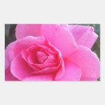 Pegatinas rectangulares - color de rosa rosado rectangular pegatina
