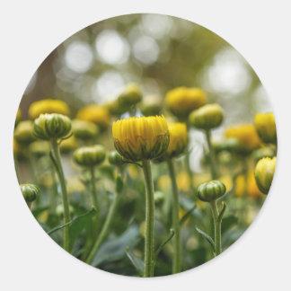Pegatinas redondos amarillos de los brotes de flor pegatina redonda