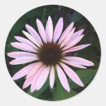 Pegatinas redondos - Coneflower rosado Etiquetas Redondas