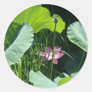 Pegatinas redondos de la charca de Lotus Pegatina Redonda