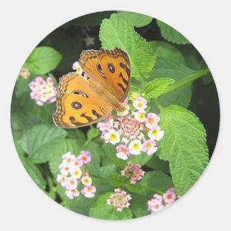 Pegatinas redondos de la mariposa anaranjada pegatina redonda
