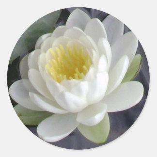 Pegatinas redondos del flor de Lotus Pegatina Redonda