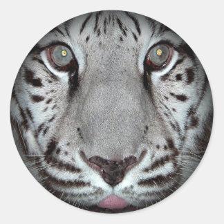Pegatinas redondos del tigre blanco pegatina redonda