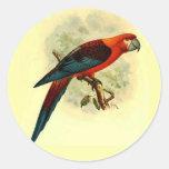 Pegatinas redondos tricolores del Ara pequeños Pegatina Redonda