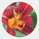 Pegatinas rojos de la flor del Daylily Pegatina Redonda