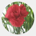 Pegatinas rojos del clavel pegatina redonda