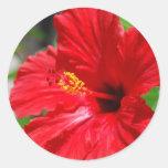 Pegatinas rojos del hibisco pegatina redonda