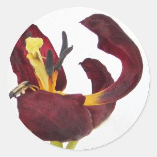 Pegatinas rojos del tulipán