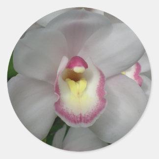 Pegatinas rosados blancos de la orquídea pegatina redonda