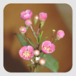Pegatinas rosados de la flor