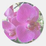 Pegatinas rosados de la orquídea etiquetas redondas