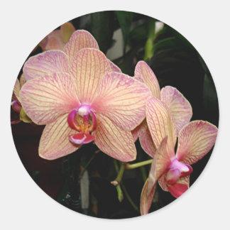 Pegatinas rosados de la orquídea pegatina redonda