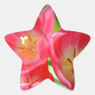 Pegatinas rosados de los tulipanes pegatina en forma de estrella