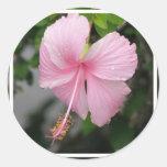 Pegatinas rosados del hibisco