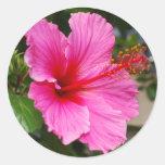 Pegatinas rosados del hibisco pegatina redonda