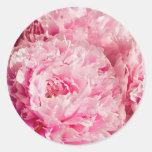 Pegatinas rosados del Peony Pegatinas Redondas