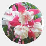 Pegatinas rosados y blancos de Fuschia Pegatina Redonda