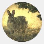 Pegatinas salvajes de los conejos etiqueta redonda