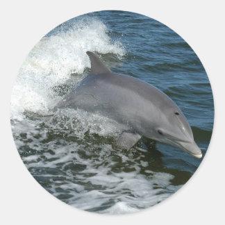 Pegatinas salvajes del delfín etiquetas redondas