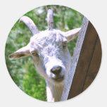 Pegatinas sonrientes de la cabra etiquetas redondas