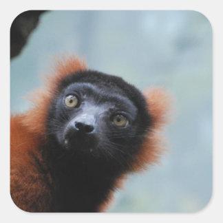 Pegatinas superados rojo del Lemur Pegatina Cuadrada