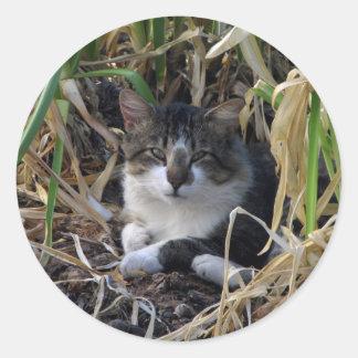 Pegatinas tímidos del gatito del muchacho pegatinas redondas