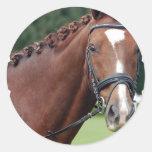 Pegatinas trenzados de la melena del caballo