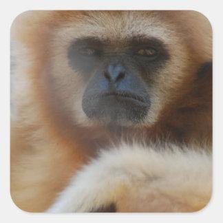 Pegatinas tristes del Gibbon Pegatina Cuadrada