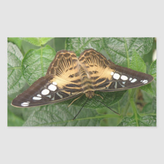 Pegatinas tropicales bonitos de la mariposa de las pegatina rectangular
