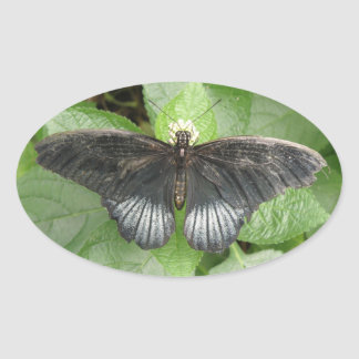 Pegatinas tropicales bonitos de la mariposa y de pegatina ovalada