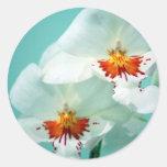 Pegatinas tropicales hermosos de las orquídeas etiqueta redonda