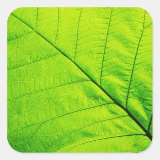 Pegatinas verdes de la hoja pegatina cuadrada