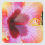 Pegatinas vibrantes del hibisco calcomanía cuadrada personalizada