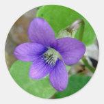 Pegatinas violetas etiquetas redondas